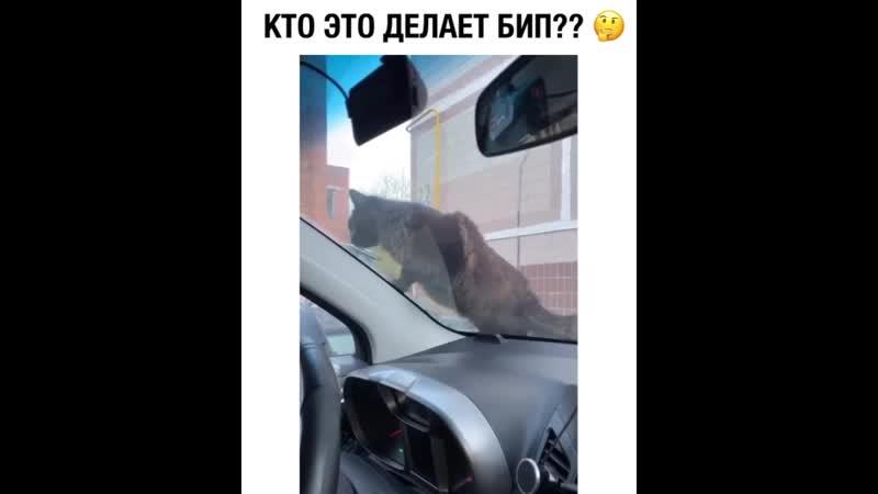 AGIRA Автозапчасти Пугают кота