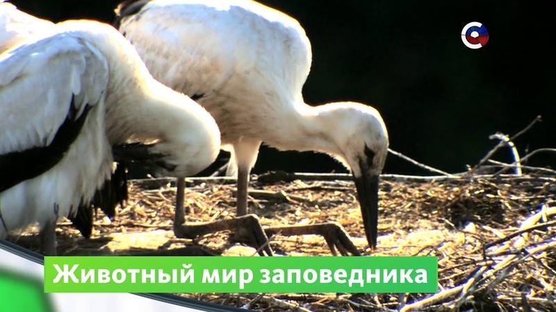 Заповедник Белогорье Природа Телеканал Страна