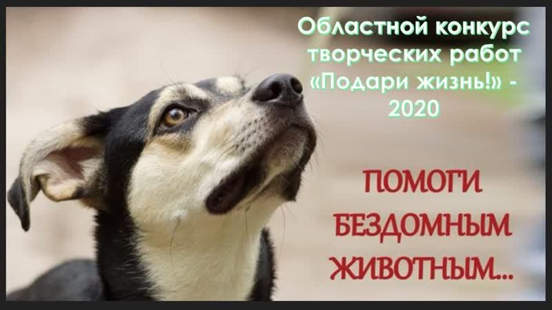 Помоги бездомным животным учащиеся 3 В класса МАОУ СОШ №16 Великого Новгорода