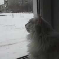 Фотография профиля Светланы Деревцевой ВКонтакте