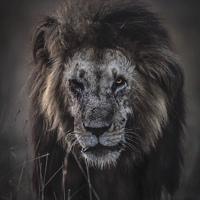 Фотография профиля Дениса Синченко ВКонтакте