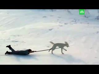 Как домашние животные радуются снегу