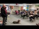 стаффордширский Терапевтическая собака Питбуль Собаки-терапевты Канис-терапия Собакотерапия Канистерапия зоотерапия питбуль