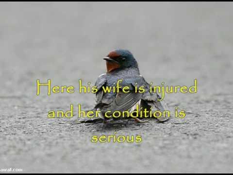 A Sad Bird Story