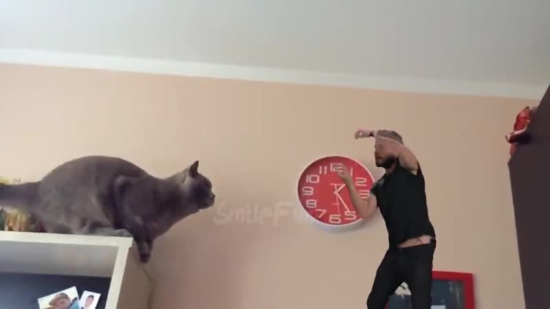 КОТЫ 2019 Смешные коты и котики приколы с котов до слез Смешные кошки Funny Cats