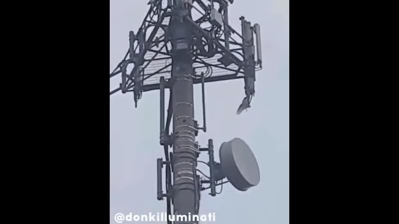 Uccelli cercano di strappare i cavi dell antenna 5G loro sanno perché mp4