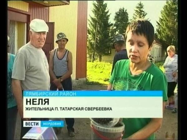 Жители Свербеевки мух из своих квартир выгребают ведрами