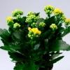 Комнатные цветы | Растения. Мурманск