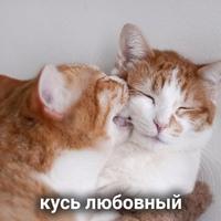 Шелков Егор фото