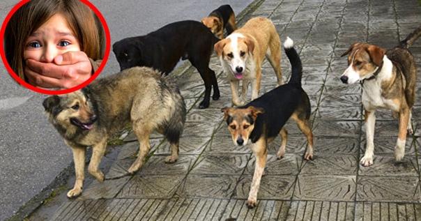 Люди разбегались, как тараканы! На помощь детям пришли бродячие собаки ...  ...