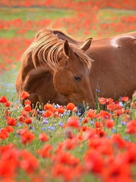 Цветы, как люди, на добро щедры. И щедро нежность людям отдавая, Они цветут, сердца отогревая,Как маленькие, теплые