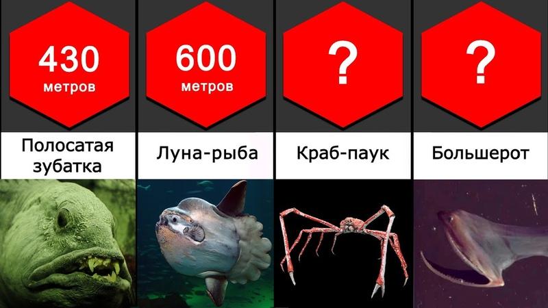 Сравнение Бездна Глубоководные существа